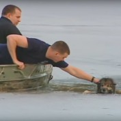 This Dog Was Drowning In A Freezing Pond. When I Saw What They Had To Do To Rescue Him, My Jaw DROPPED.