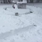 Watch Finn The Tiny Dog Go Crazy In The Snow