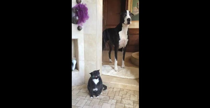 Come On, Cat, It's My Turn!