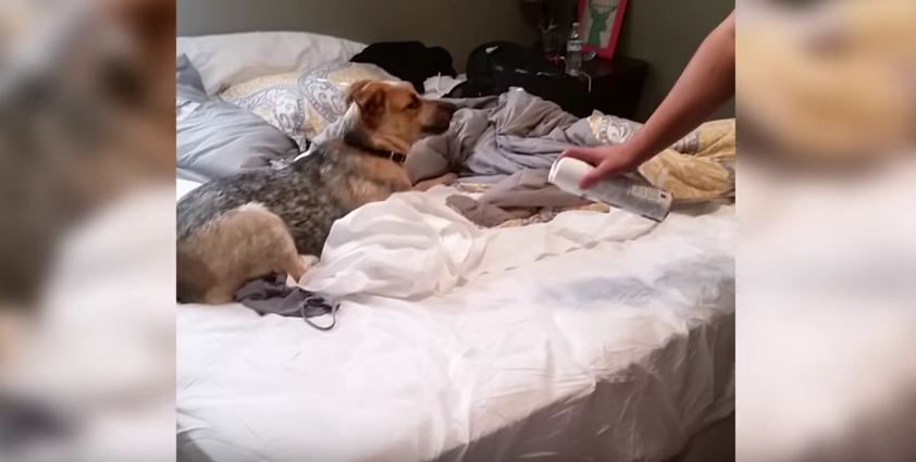 Dog Finds Cute Way to Avoid a Bath