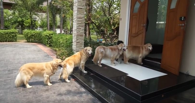 Watch These Obedient Dogs Wait To Have Their Feet Cleaned Before Entering The House