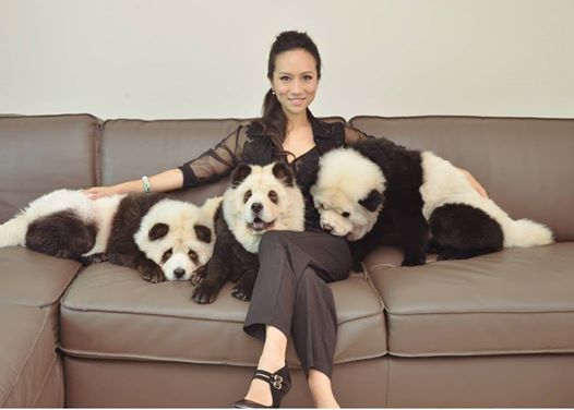 Woman Who Transforms Her Dogs Into Pandas For Photoshoots Meets Controversy