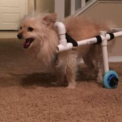 Man Creates Wheelchair For His Girlfriend's Dog With Just $40