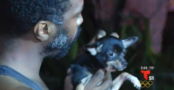 Dog Saves Man from Fire but Is Left Behind Burning Home