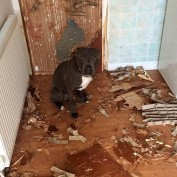Dog Owner Returns From The Hospital And Finds His Apartment Trashed