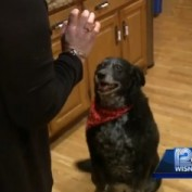 Hero Dog Saves Family from Deadly Gas Leak