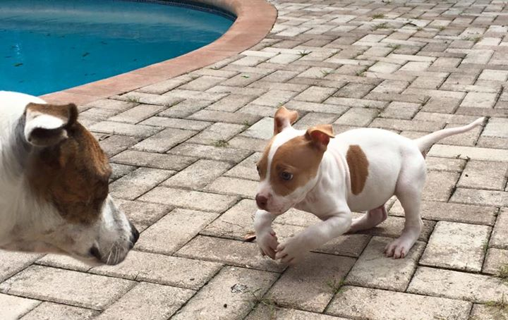 This Puppy May Have Deformed Legs, But He Won't Let That Slow Him Down!