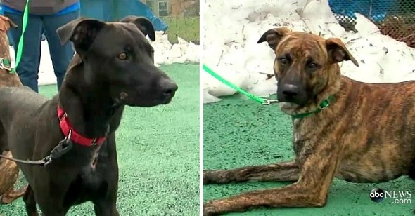 Devoted Dog Stays with Injured Brother During Blizzard