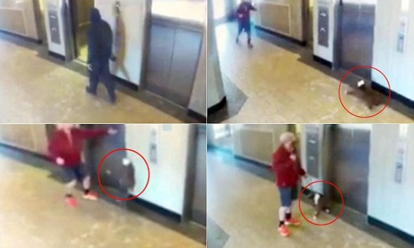 Heroic Man Saves Dog from Terrible Elevator Accident