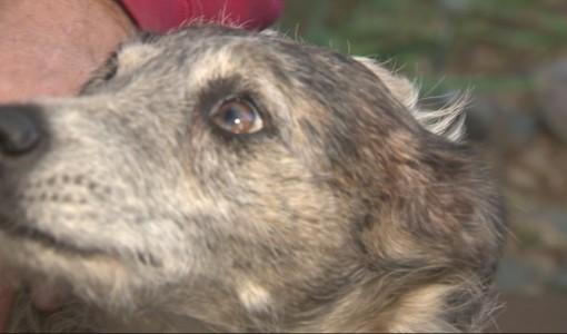 Man Runs After Mountain Lion In His Underwear To Save His Senior Dog