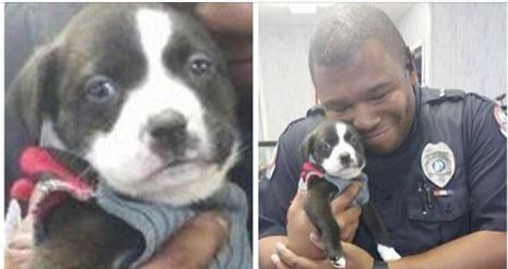 Florida Police Officer Makes A Call To Animal Rescue And Leaves With a Puppy