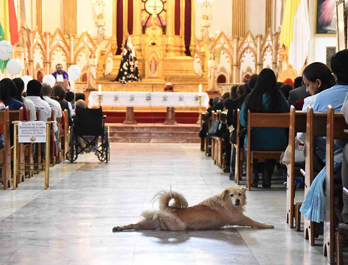 Stray Dog Crashed A Church Service For Sick Kids And Makes Everyone Smile