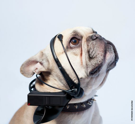 3 New Products That Claim They Can Translate What Your Pet Is Thinking
