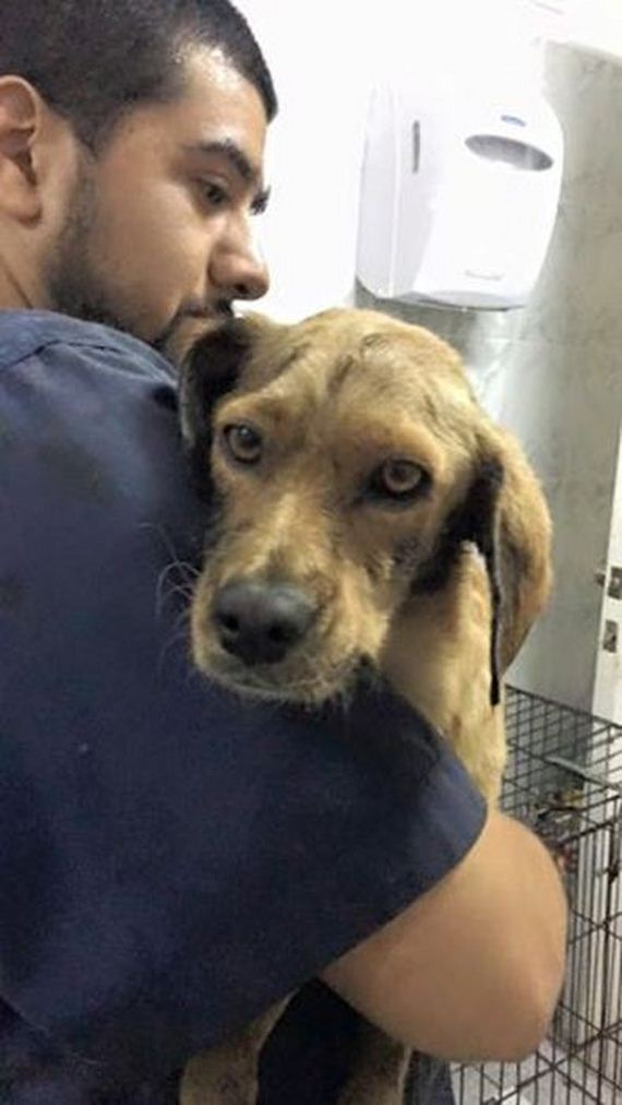 08-dog_rescue