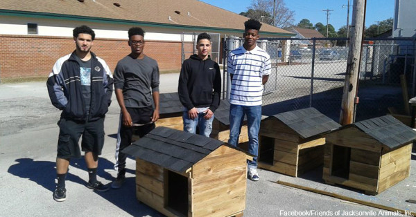 Teaching Construction Skills And Protecting Animals