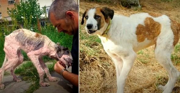 Bulgarian Street Dog's Miraculous Transformation