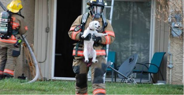 Puppy Smiles For Everyone While Being Rescued From Burning Apartment