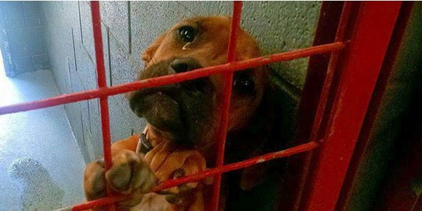You Wouldn't Believe Why They Picked This Shelter Dog Instead Of Others