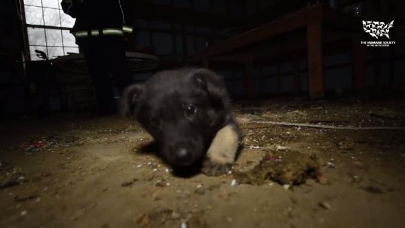 Handicap Puppy Mill Dog Gets to Walk Again