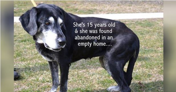 15-Year-Old Dog Left Behind Like Unwanted Trash – Found Alone In Abandoned Home