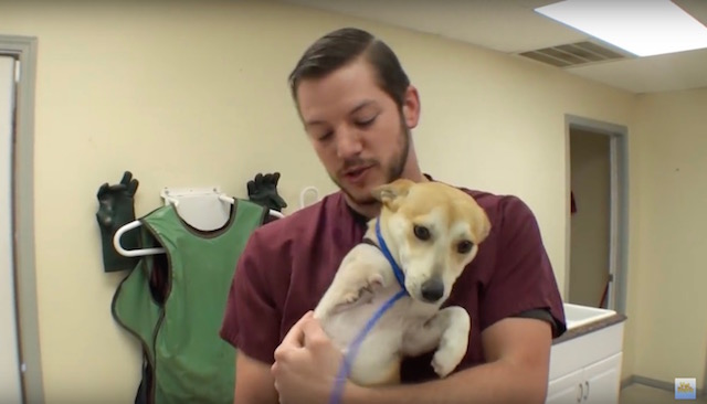 This 3-Legged Vet Ranch Patient Is The Happiest Puppy You'll See All Day!