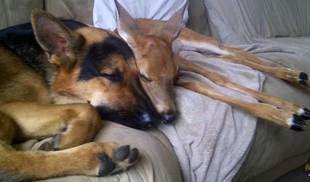 30 Unlikely Animals Sleeping Together Like Babies Will Melt Your Heart!