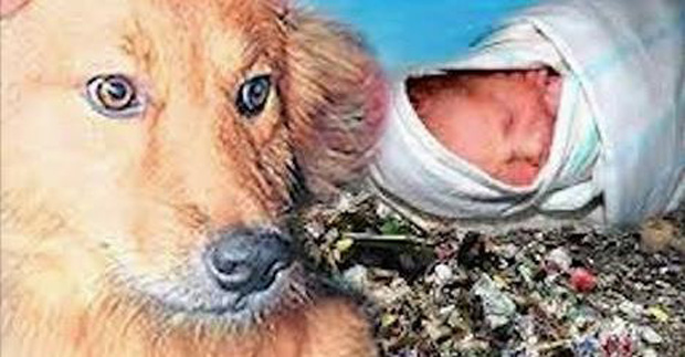 Dog Saves Newborn Baby Abandoned Left To Die At Trash Heap