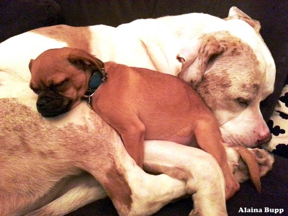 Big Ol' Mush of a Dog Gives Cuddles to Scared Shelter Animals