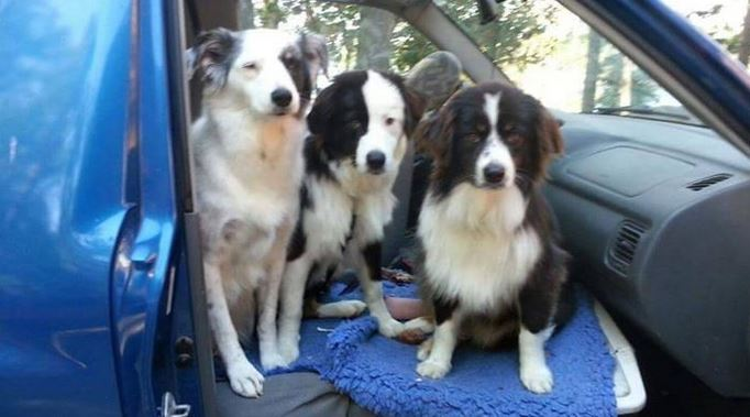 Woman Fighting Terminal Cancer Finds A Home For Her 3 Beautiful Dogs