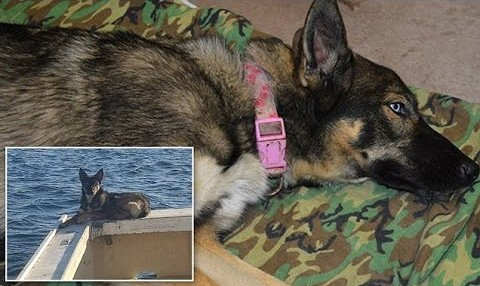 Dog Fell Off A Boat While In Pacific Ocean. A Month Later, I Can't Believe My Eyes!!