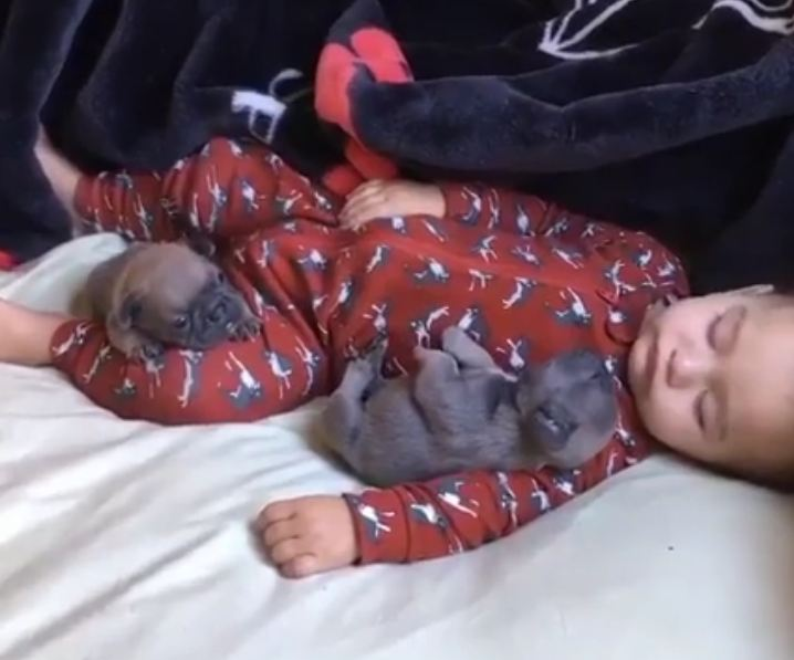 Sleeping Baby Snuggles Up With Two Tiny Puppies
