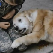 Elderly Dog Cries When Her Mom Finally Comes Home