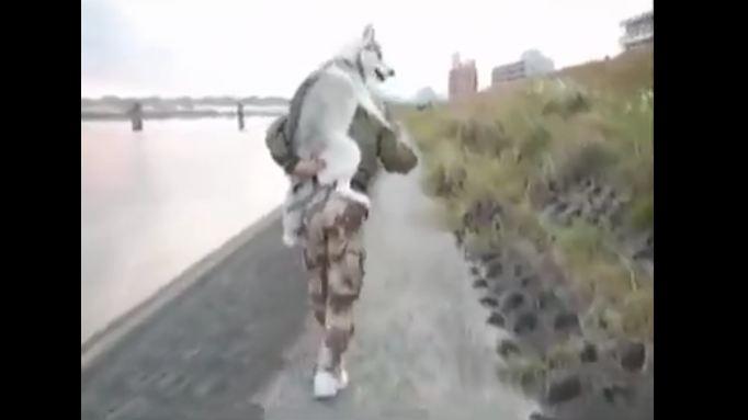 Husky Demands Piggy-Back Ride When Feet get Tired