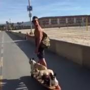Six Frenchies on a Motorized Hamboard