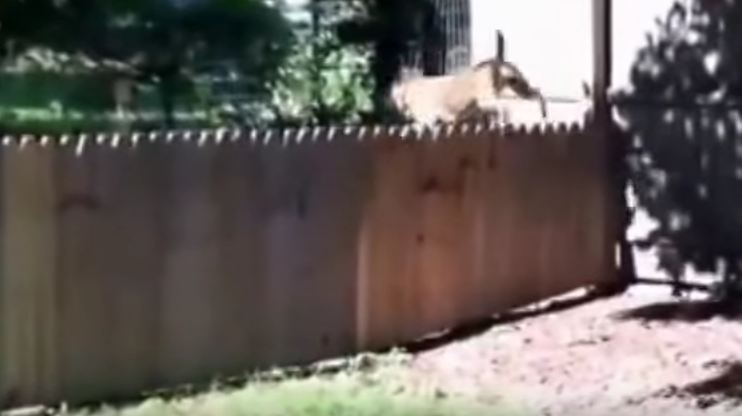 Man Proudly Displays New Fence for Dog