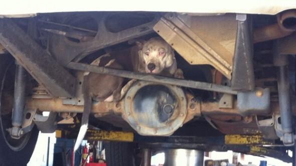 Woman Adopts Dog Found Hiding Under her Car