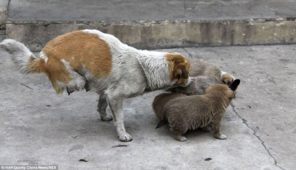 Two-Legged Stray Momma Cares For Her Homeless Family