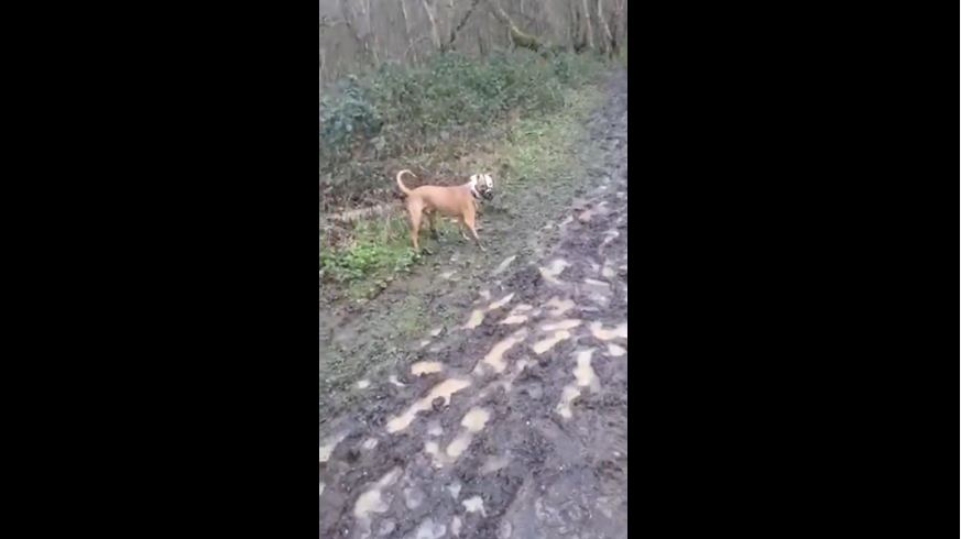 Dog playing in mud exhibits classic canine behavior