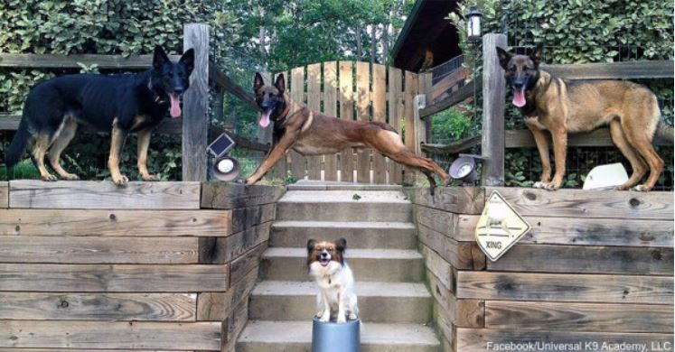 Group Saves Shelter Dogs From Certain Euthanasia To Work In Police K-9 Units