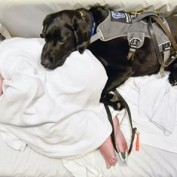 This Service Dog Makes Life Easier For A Boy With Autism…Even At The Hospital