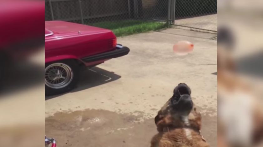 Slow-Motion Water Balloon Catch