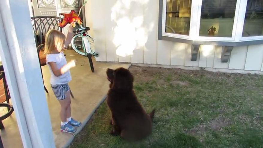 How to negotiate with a puppy!