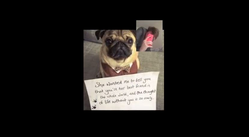 Woman Proposes To Her Boyfriend With The Help Of An Adorable Pug