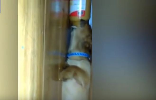 Dog Is a Master of Stealth Peanut Butter Eating