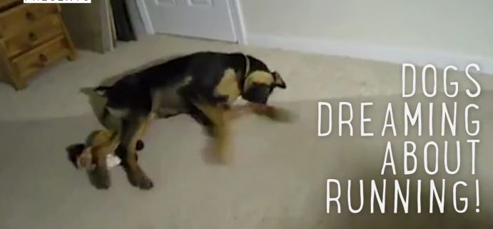 These Dogs Running In Their Sleep Will Definitely Put A Smile On Your Face