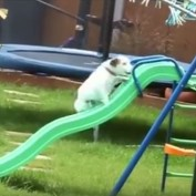 Dogs Who Are Failing in the Cutest Ways Possible