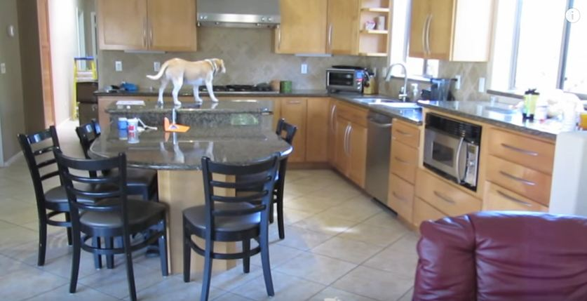 They Set Up A Camera To Record Their Dog When They Aren't Home, But They Didn't Expect THIS… Wow!