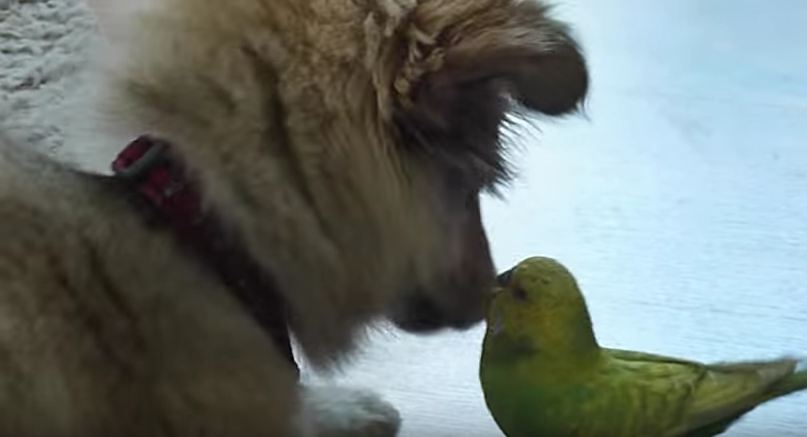This Puppy & Bird Friendship Is Definitely One Of The Cutest We've Ever Seen!