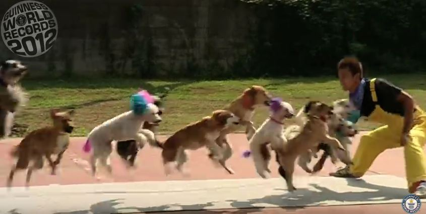 13 Dogs Jump Rope for New World Record