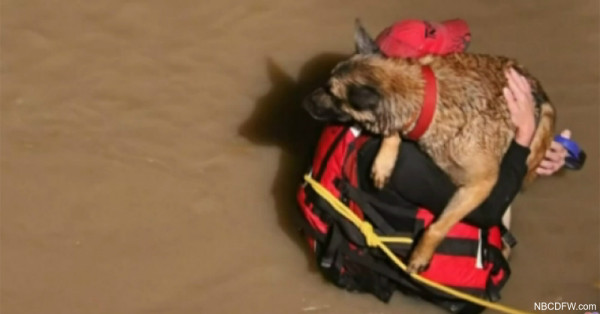 Rescued Dog Plants Wet Kisses On Fireman
